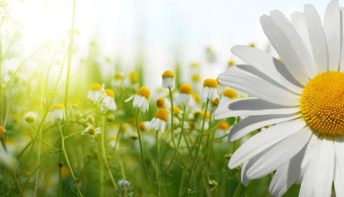 Frühlingsangebote